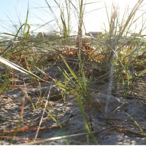 Livstjek - Gå i naturen.Græs på stranden