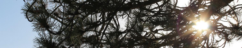 Livstjek - Kropsbehandling.Sol gennem træ.1500x300